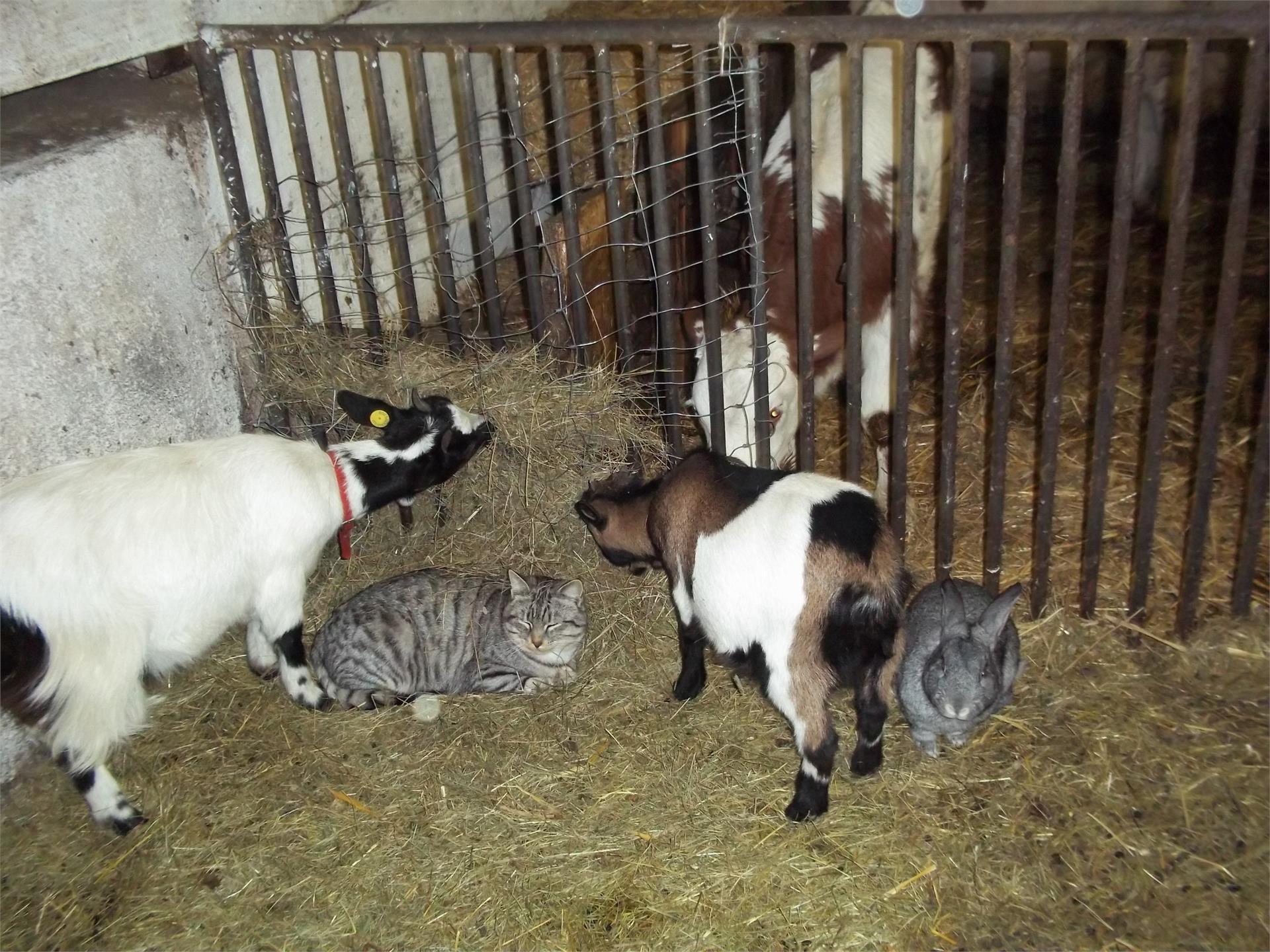 Unsere Tiere im Stall