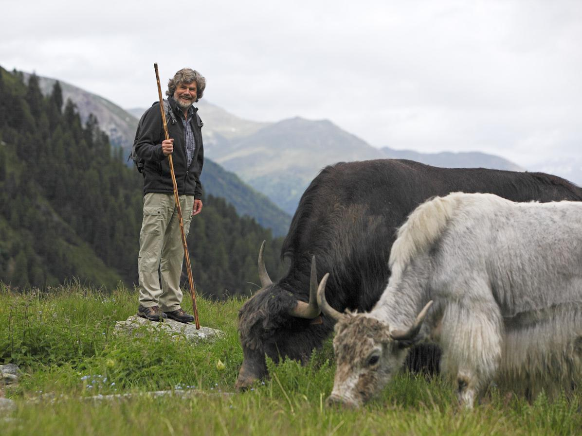 The Reinhold Messner's Yaks