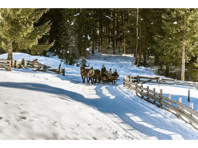 Horse sleight rides