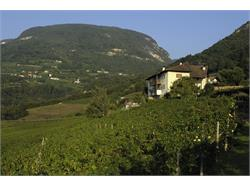 Tenutia vitivinicola Brunnenhof