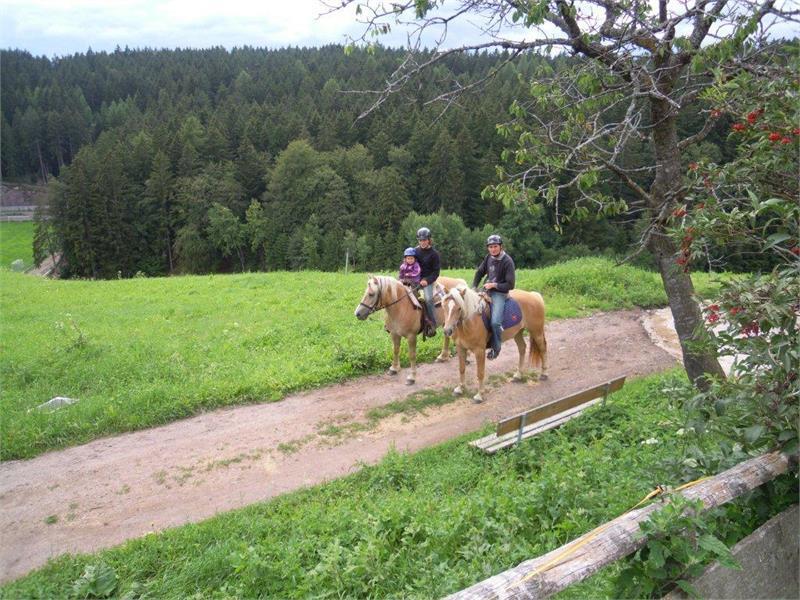 Lezioni di equitazione e gite