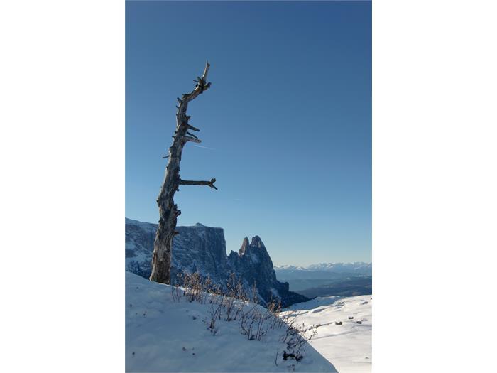 paesaggio invernale sull' alpe