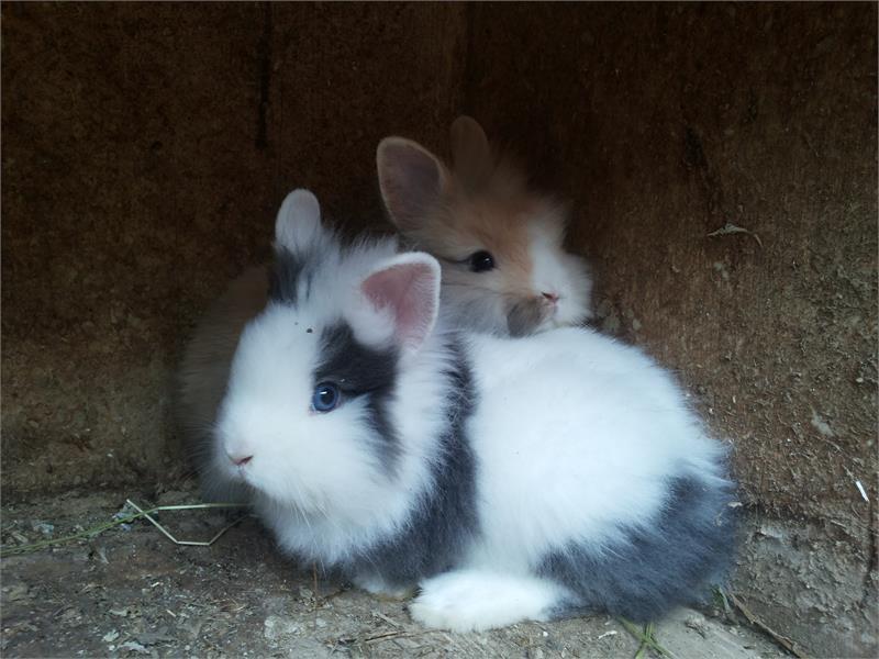 Tumlhof - Agriturismo, coniglio