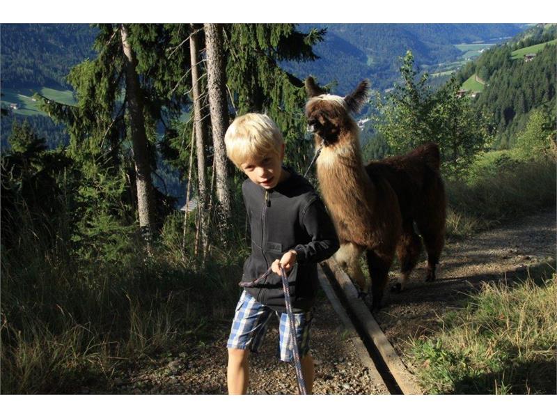 Urlaub auf dem Bauernhof, Rauchegg, Ultental, Südtirol