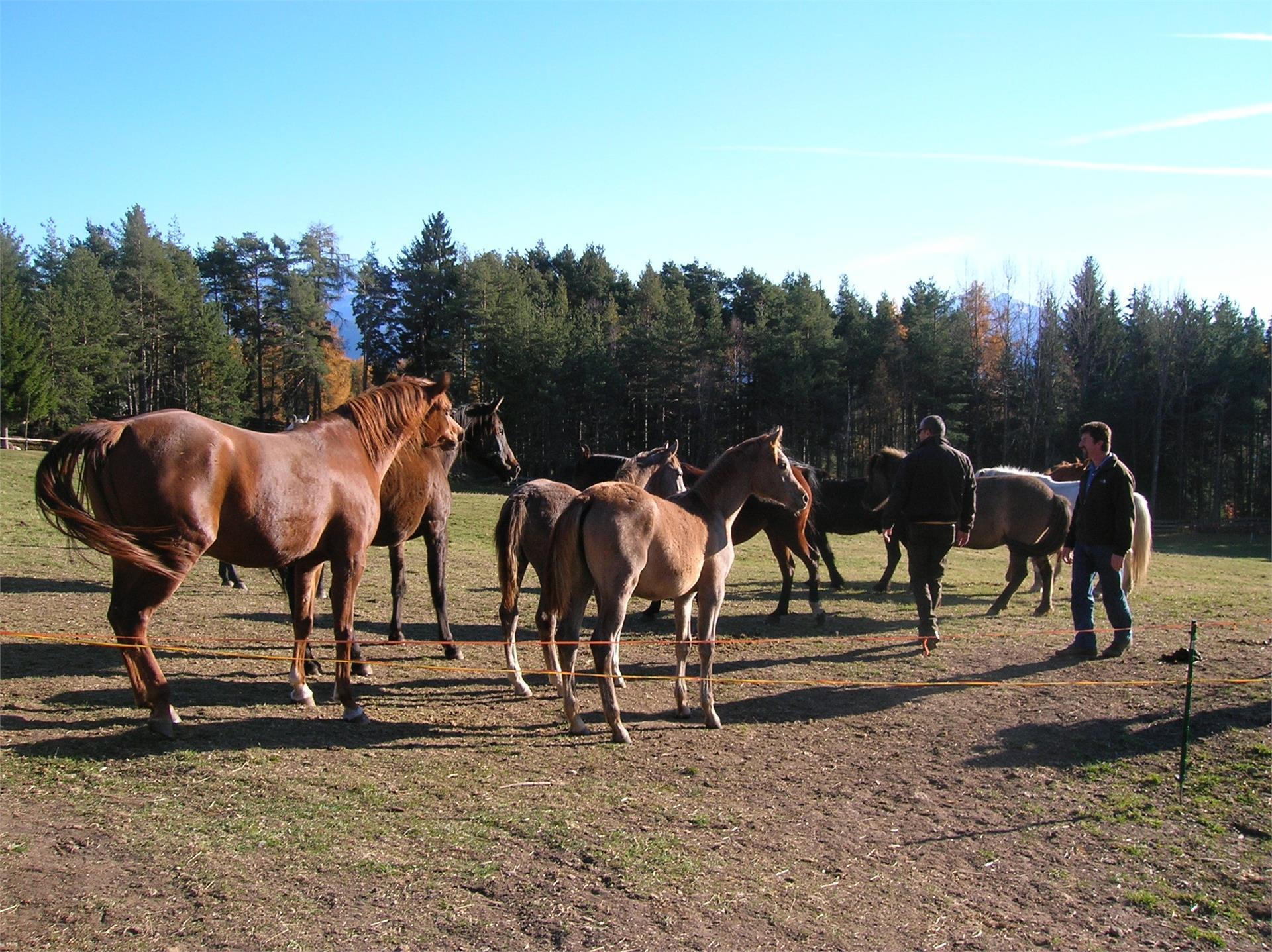 Scuola di equitazione Kaserhof