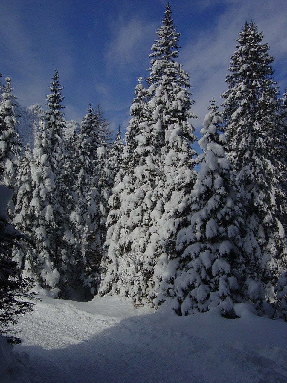 Moso - Passo Monte Croce