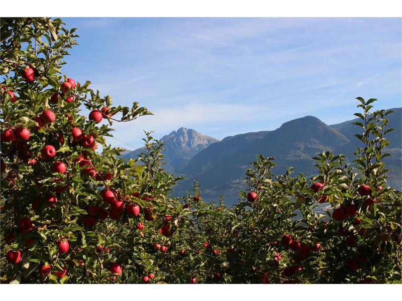 Äpfel und Berge