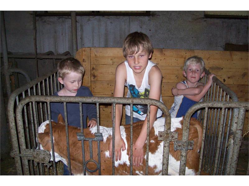 bambino con i vitelli