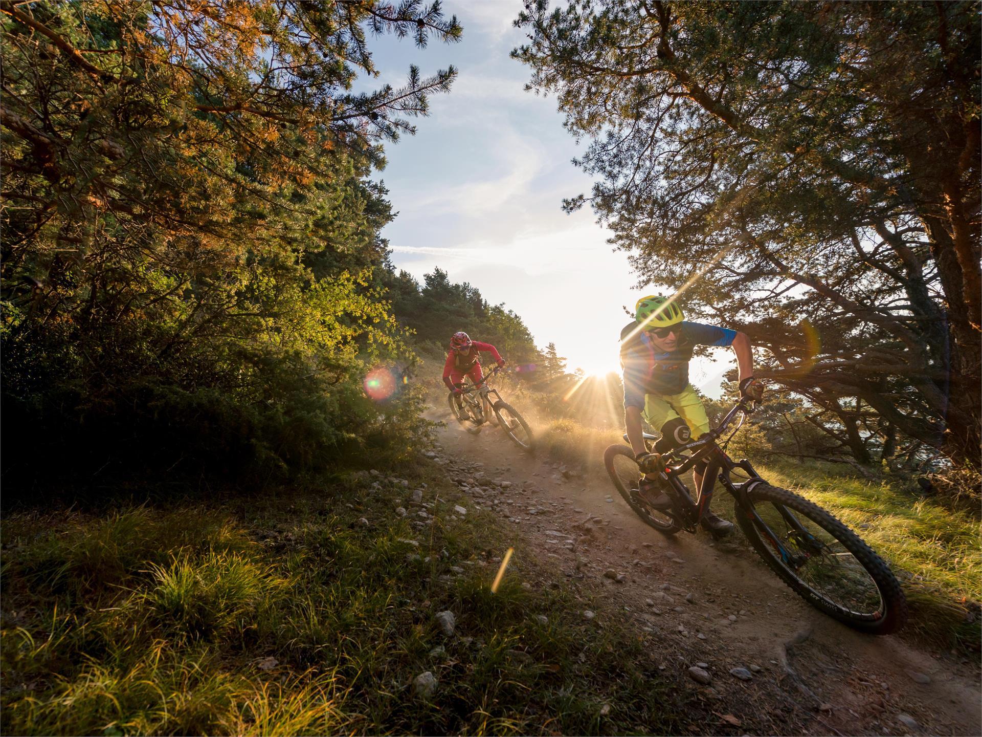 Latscher Panorama Trail