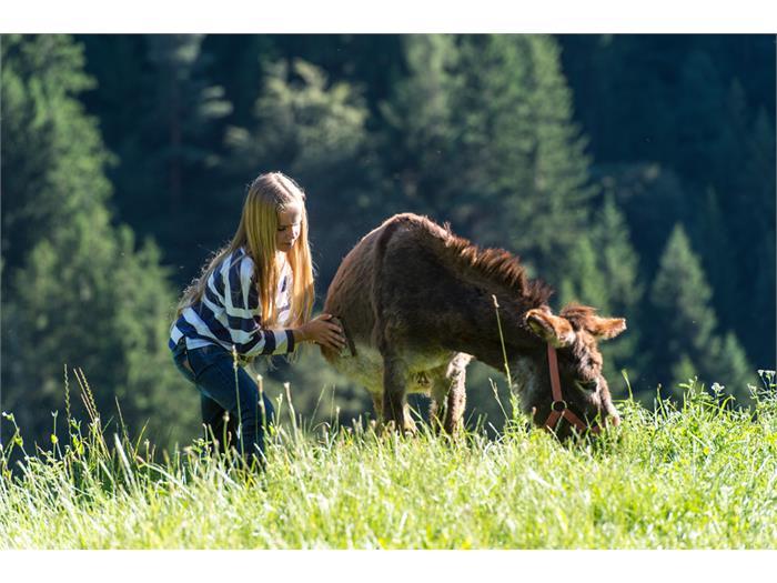 beim Eselstriegeln