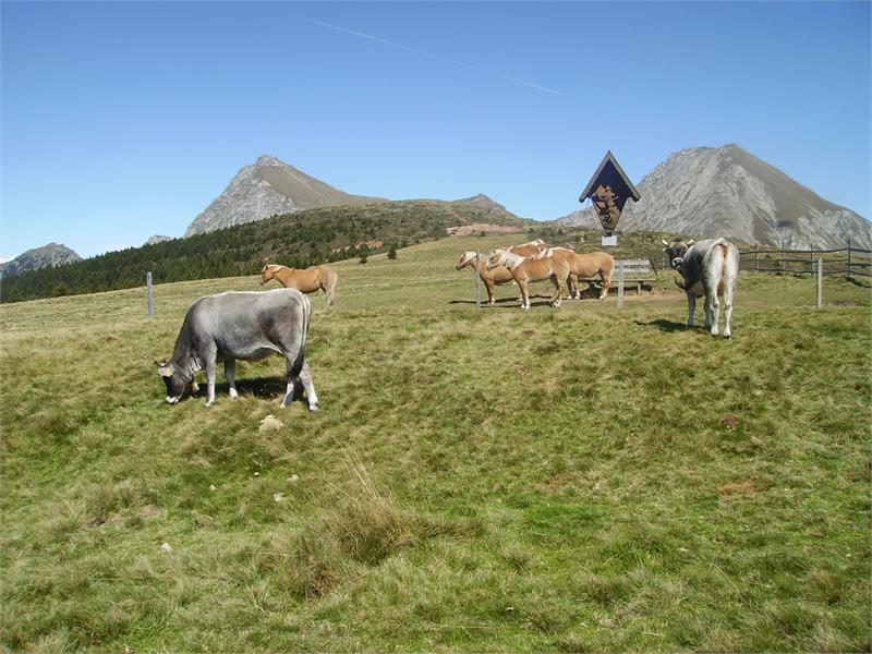 Vacanze ecursionistice in agriturismo - Boznermüllerhof in Verano, Alto Adige