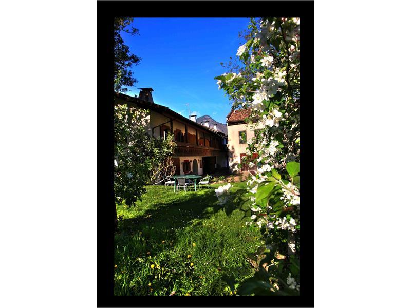 Linserhof Apfelblüte