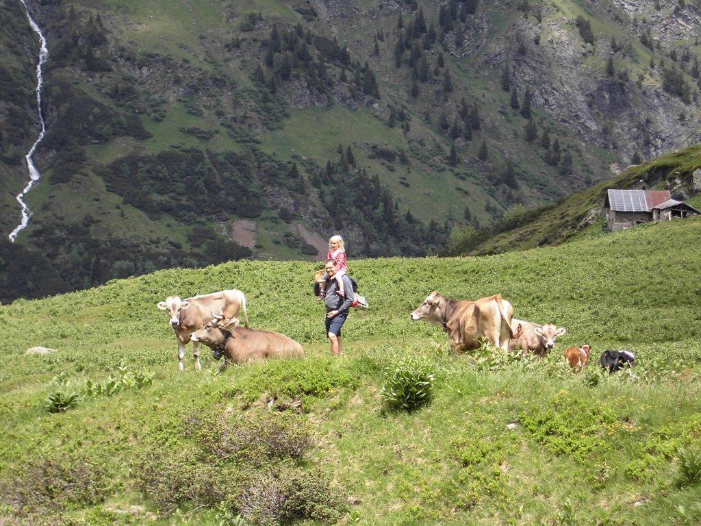 pascolo in Furt/ malga di bue, Val di Fleres