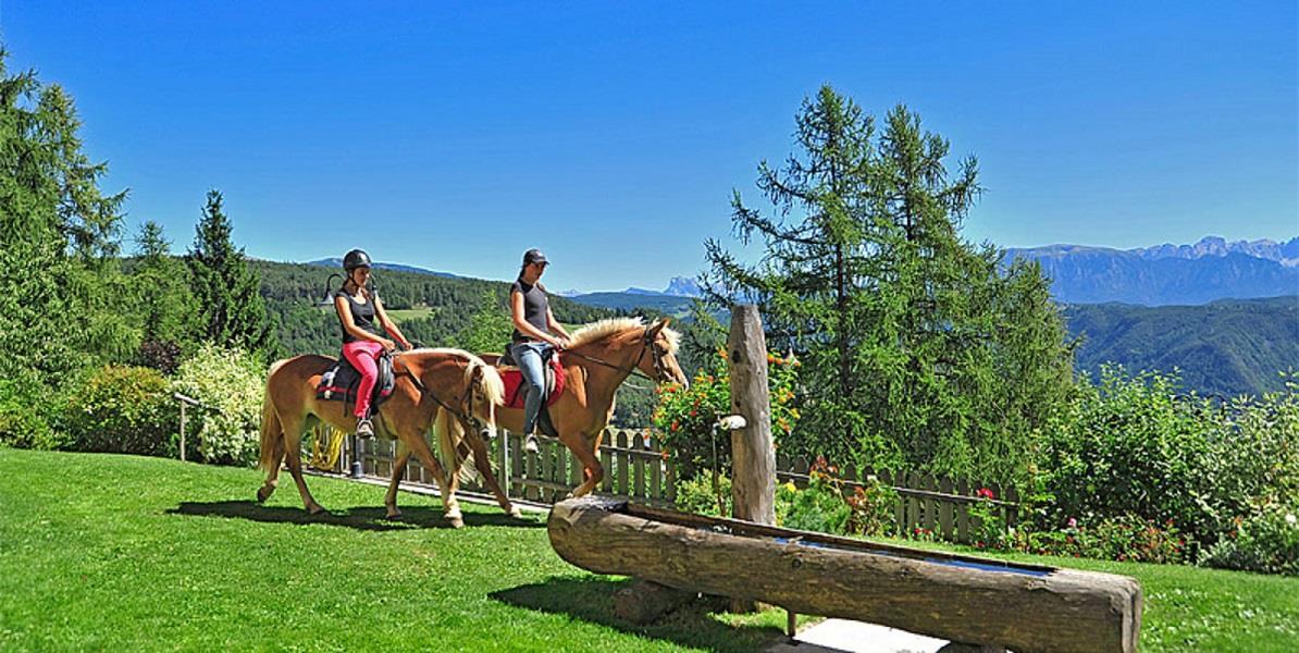 Horse farm König Laurin