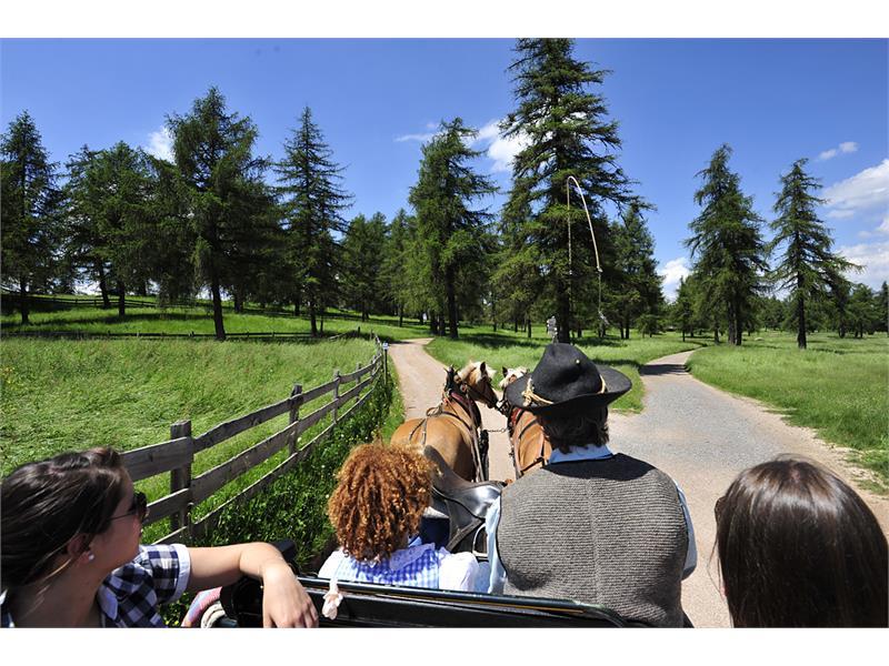 Scoprite l'Altipiano a bordo di una carrozza trainata da bellissimi Haflinger