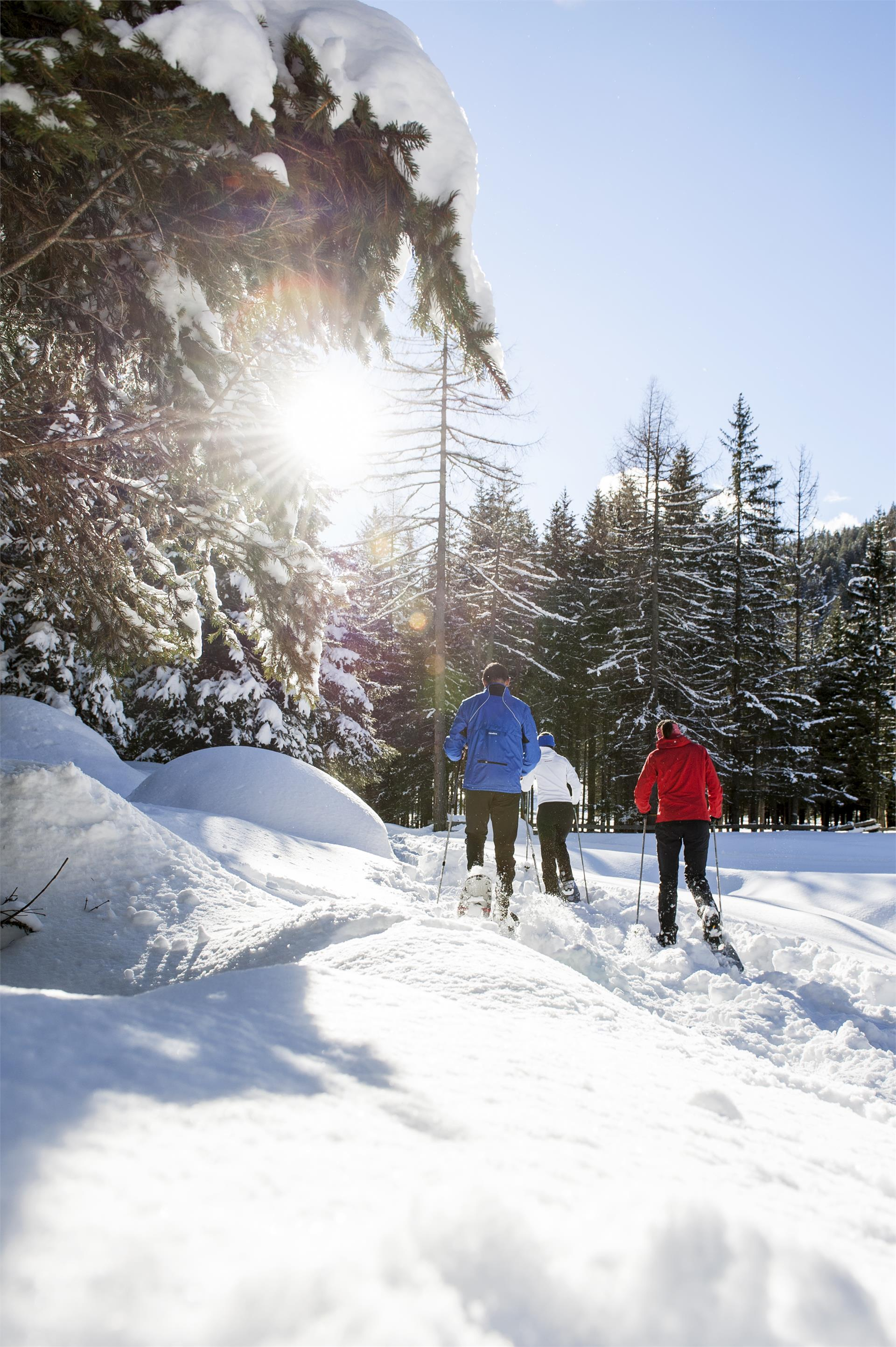 Snowshoe excursion in the  Unesco world Heritage