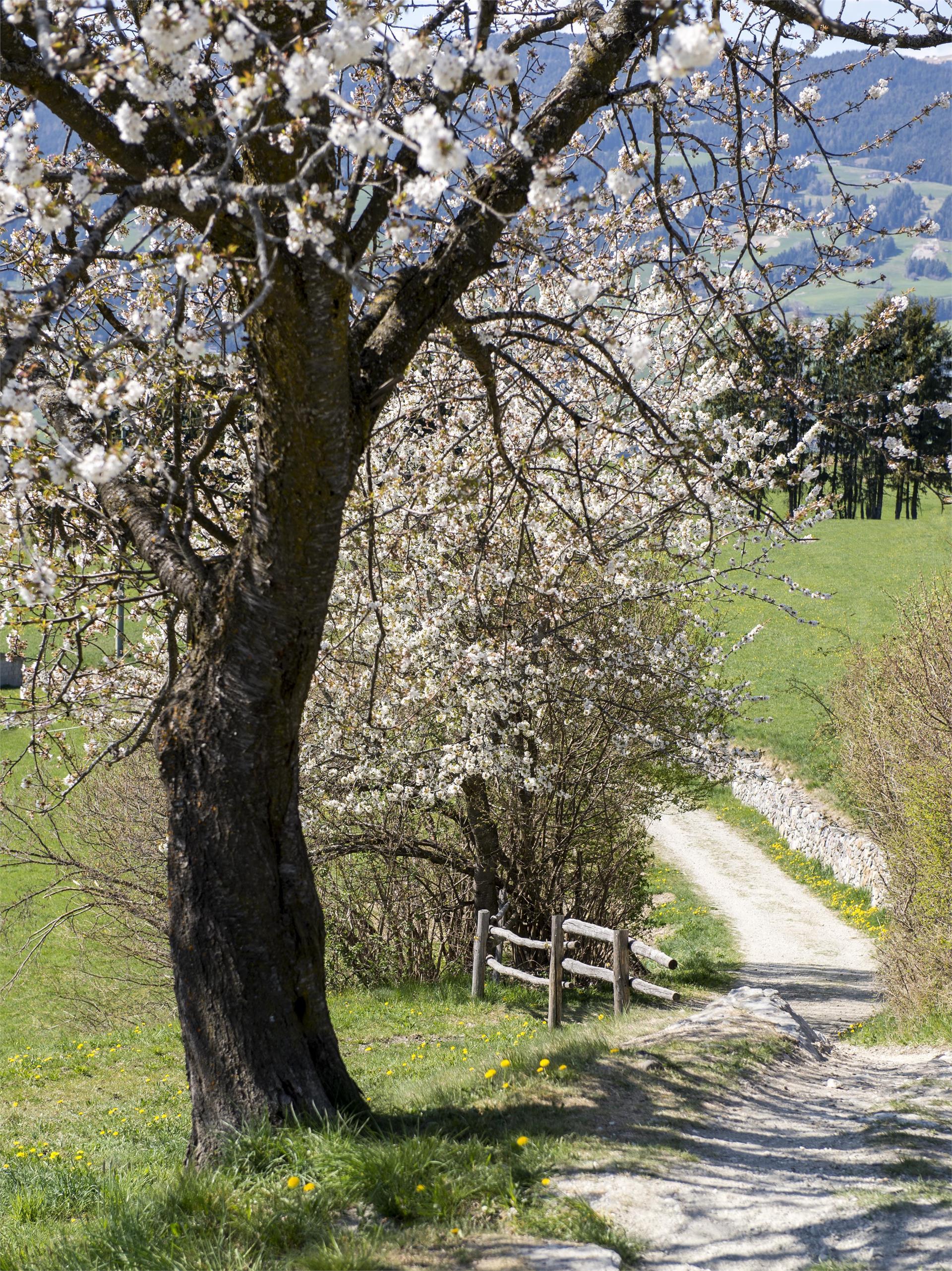 Sentiero circolare Walther v.d. Vogelweide a Laion