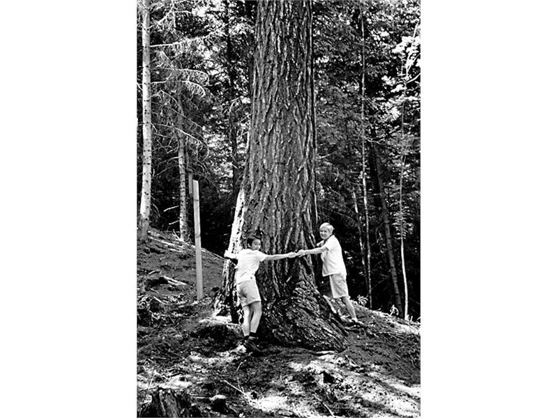 Der Lärchkönig– ein Naturdenkmal