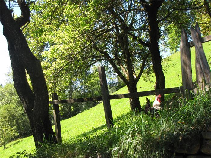 Garten- Hieblerhof, Völs am Schlern