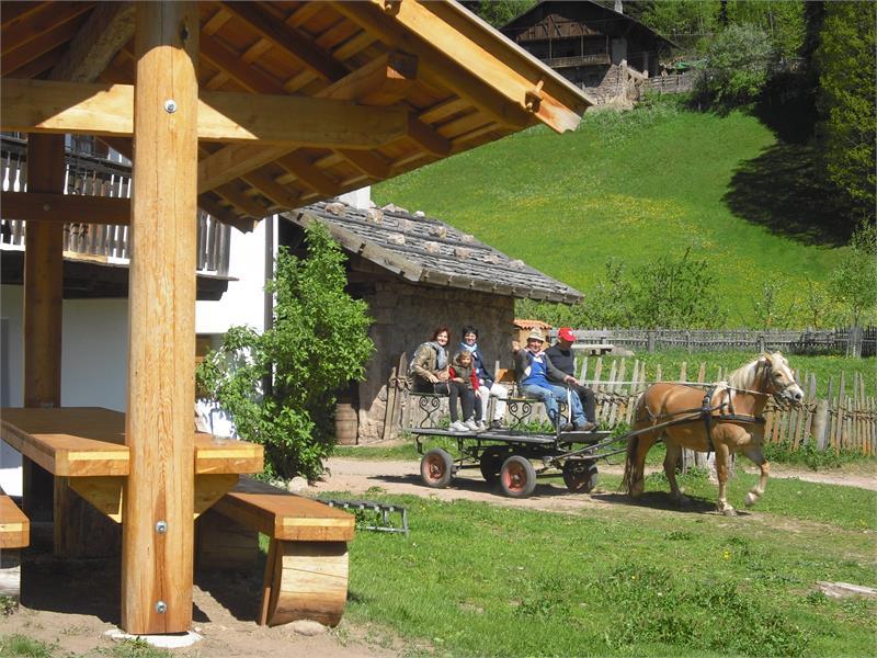 Carriage on Bacherhof