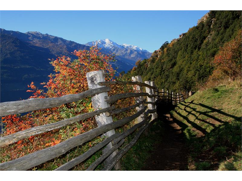 From the irrigation channel path of Rablà to the Sonnenberg Mountain Panoramic Trail