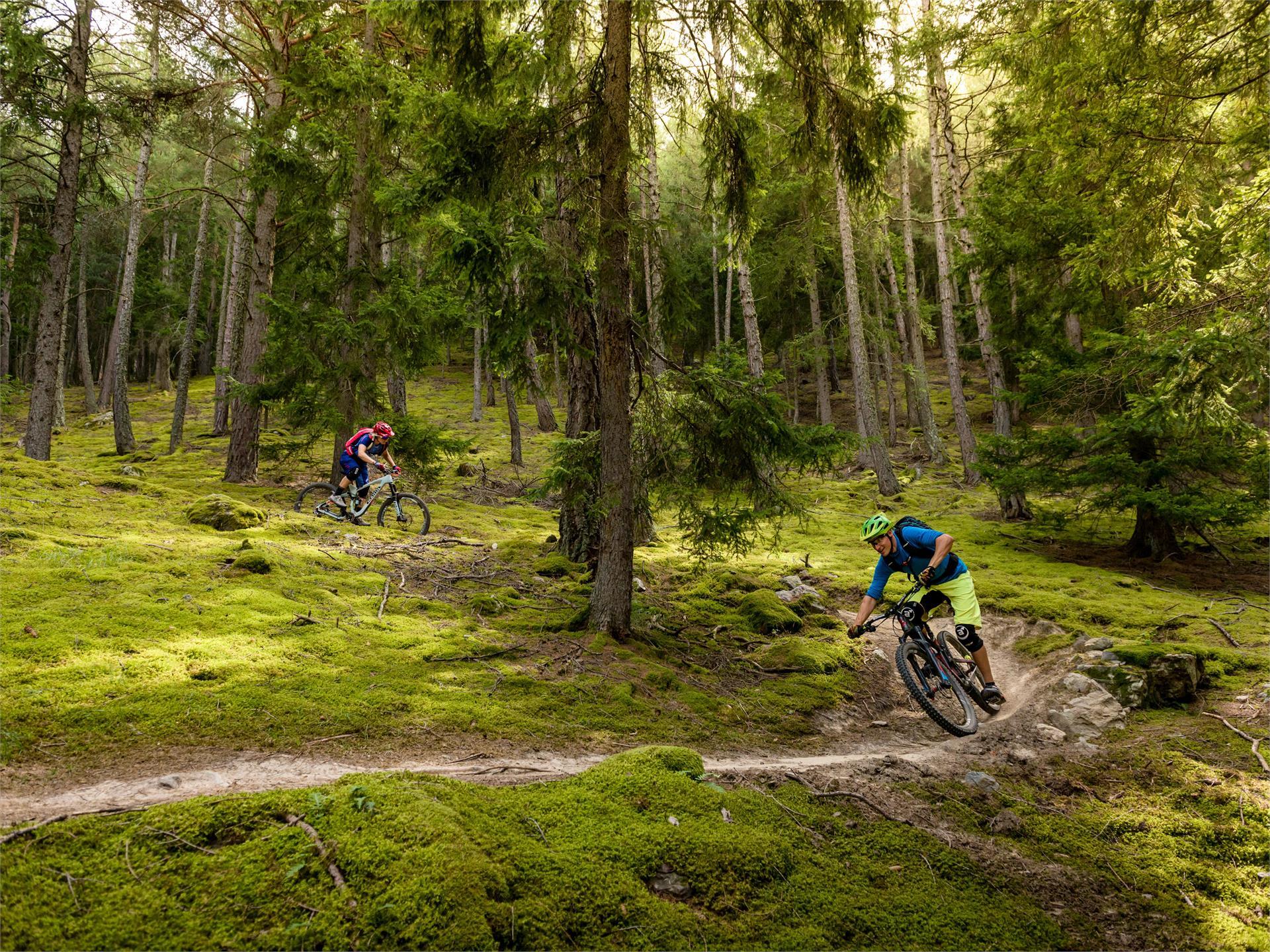 Roatbrunn Trail