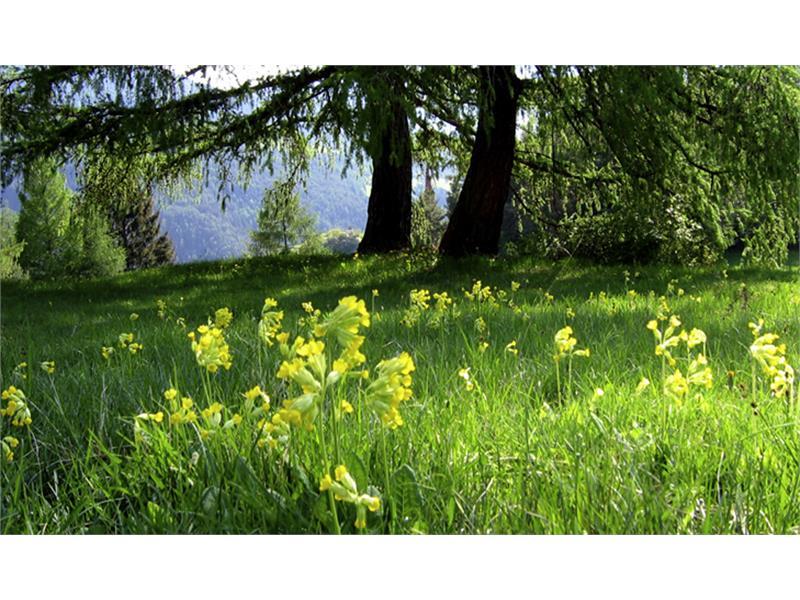 Meadow ahead of the Wetterkreuz
