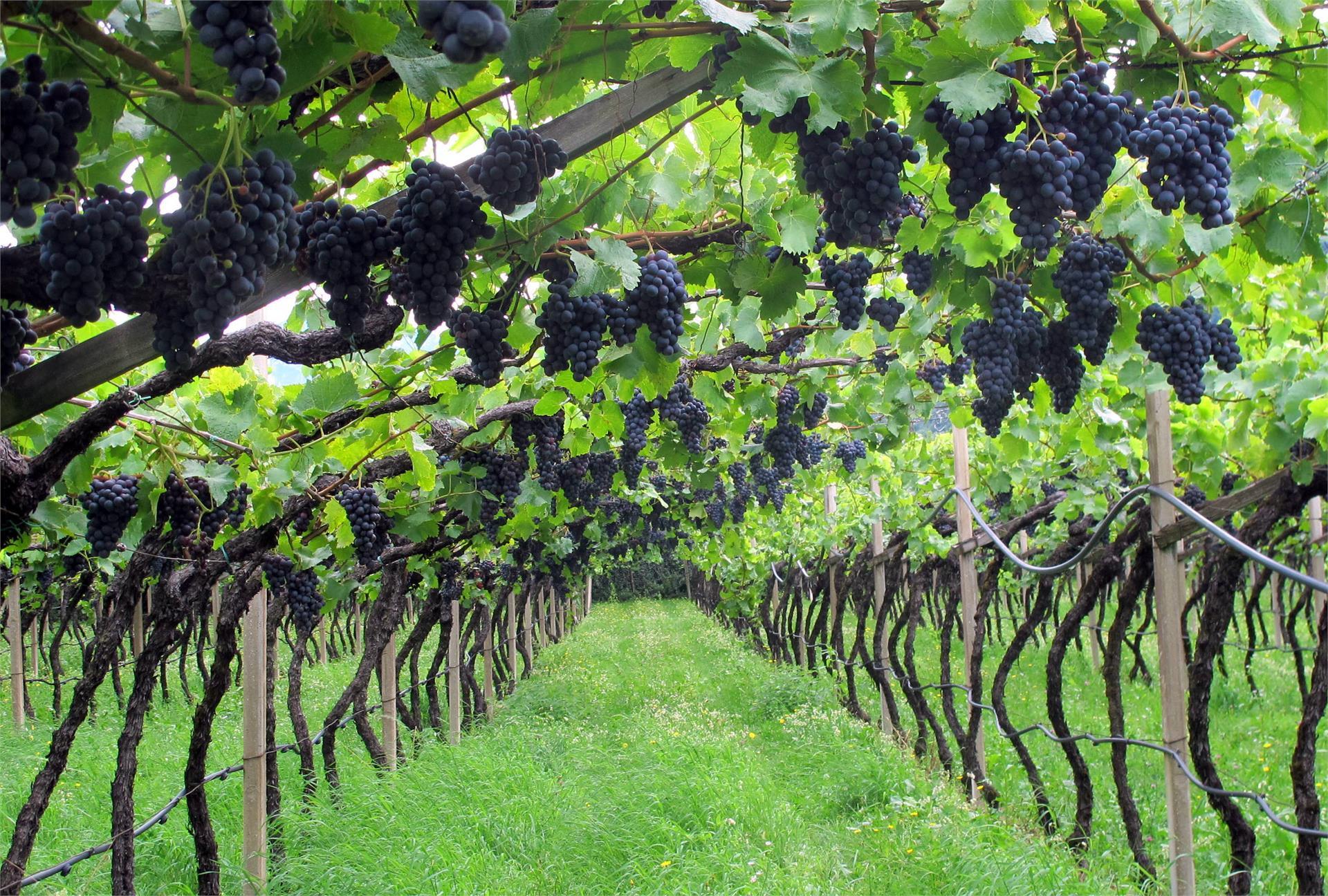 Pranzegg winery