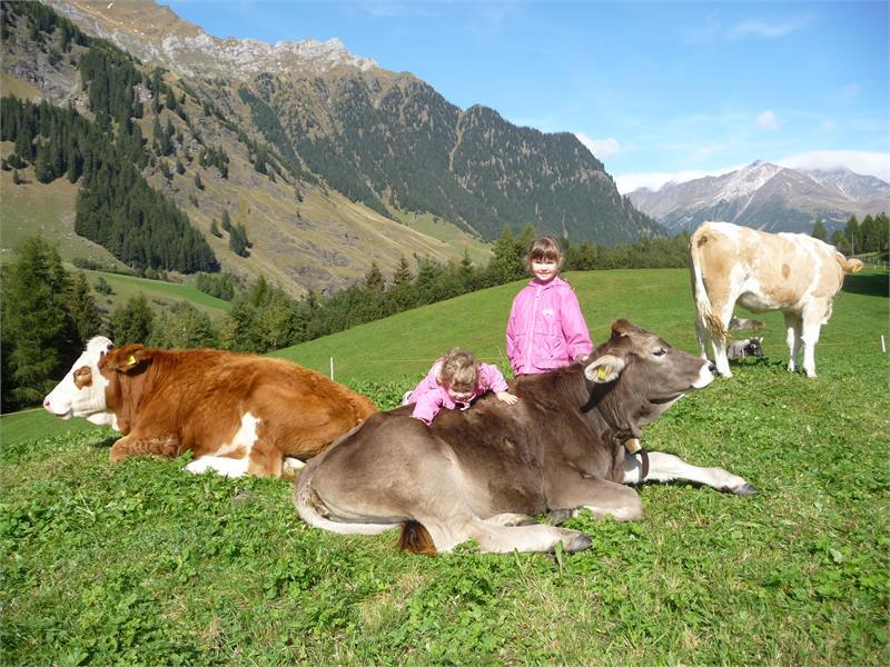 Holiday on a farm Hütterwirtshof