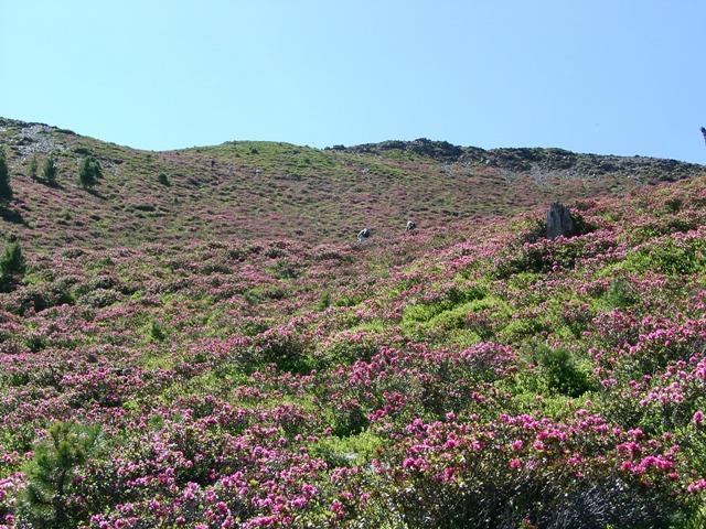 Mount Maurerberg (2332 m)