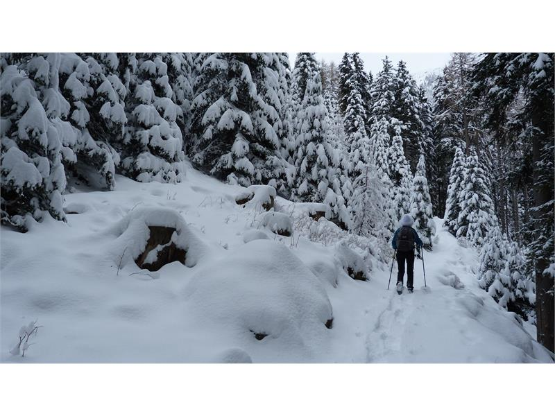 Aschbach im Winter