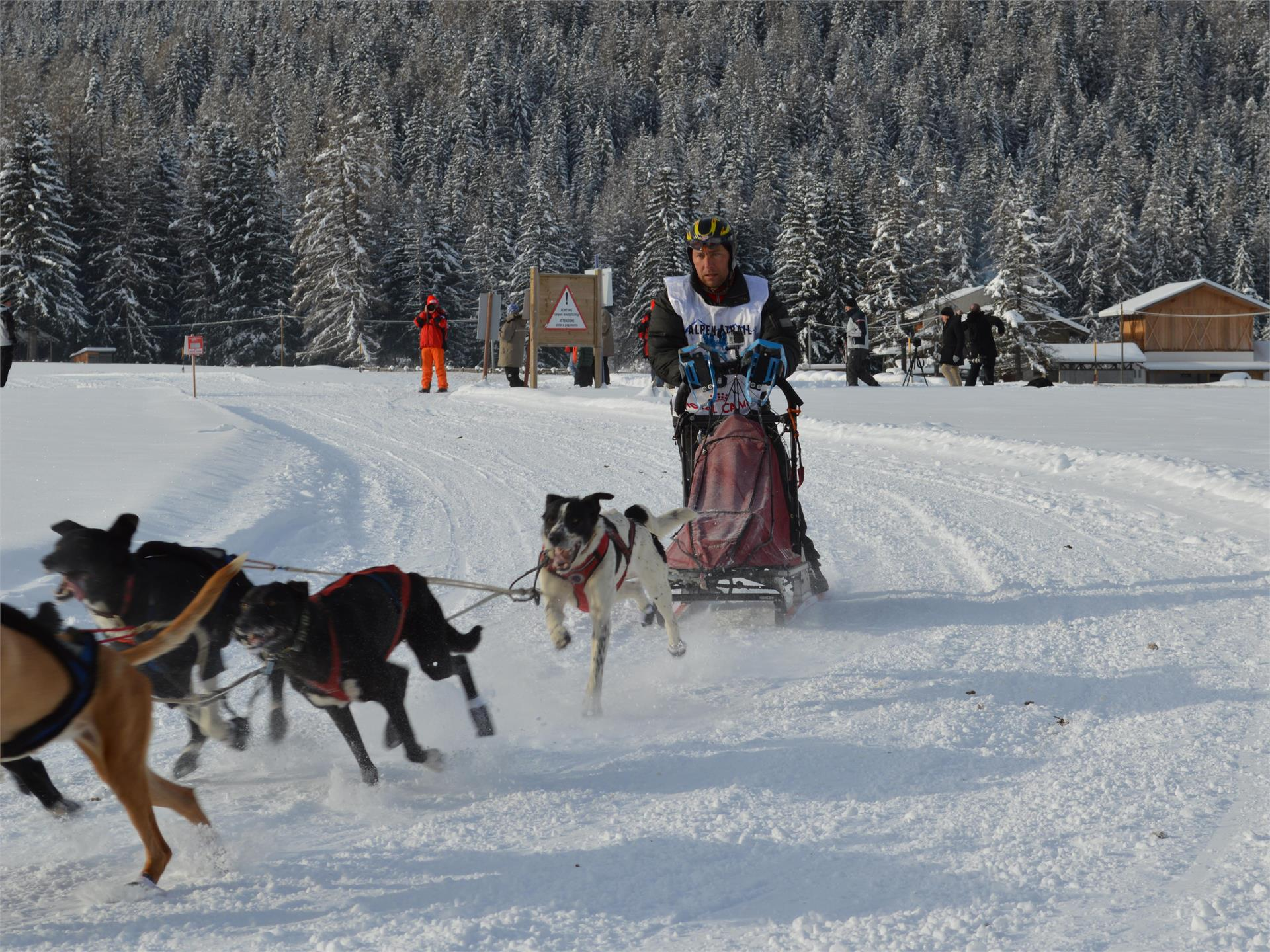 Alpentrail - international sledge dog race