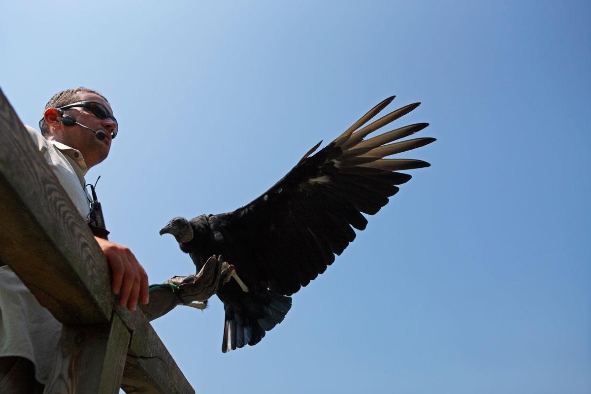 Bird Care Centre Tyrol Castle