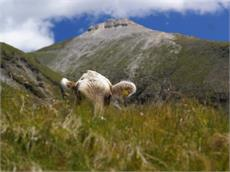Alpine Tour to the Weißspitze peak