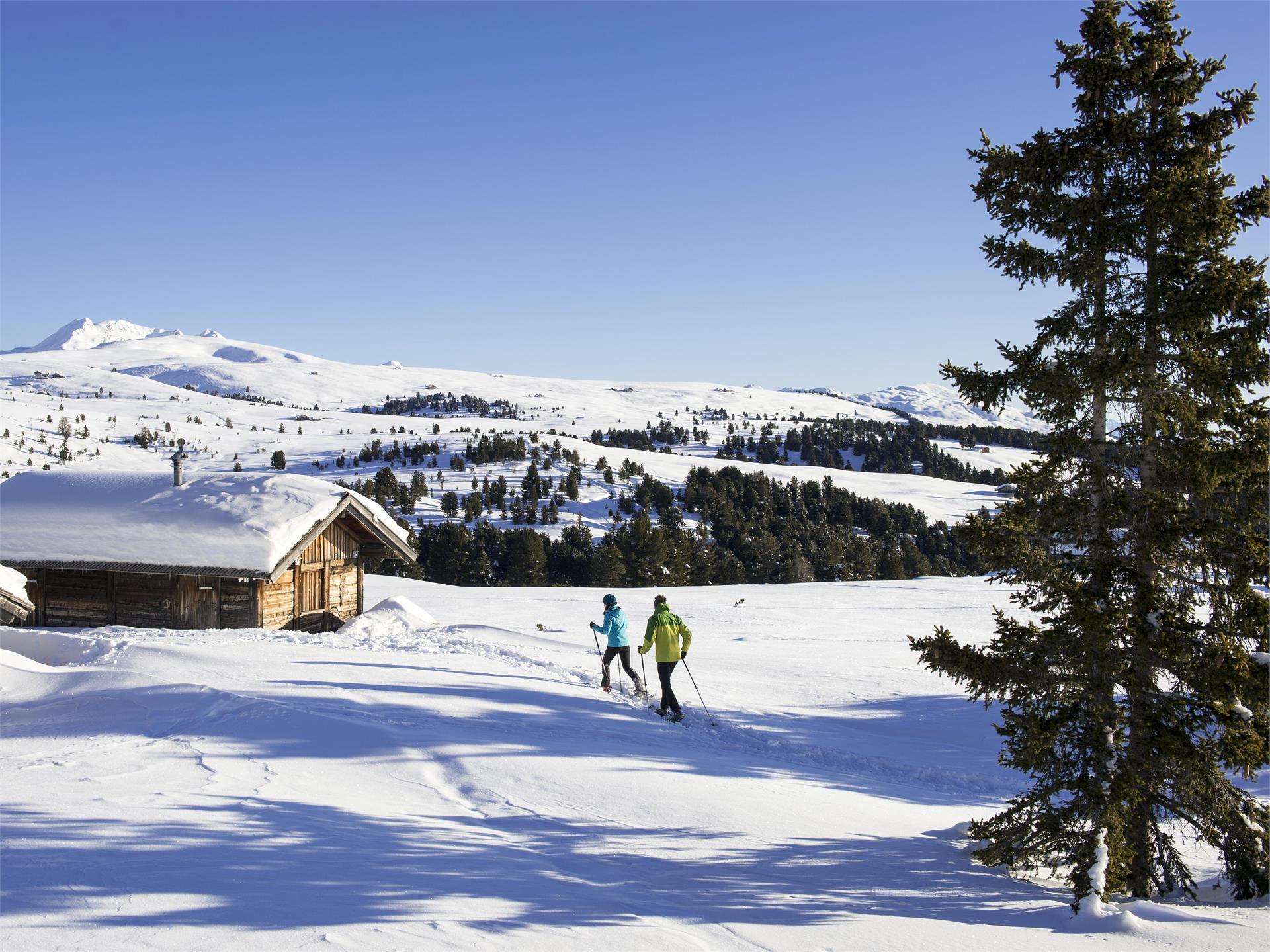 Pista panoramica sci da fondo sull'Alpe di Villandro