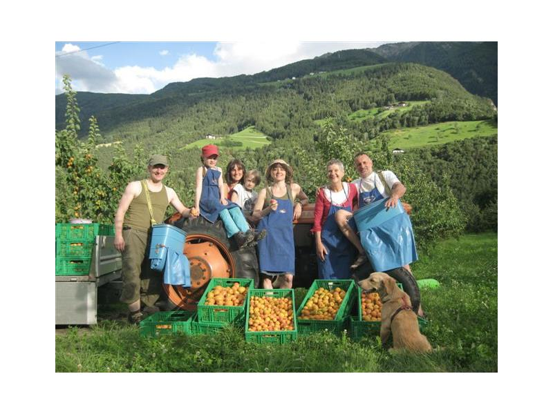 the orchards with apricots - we make homemade marmelade