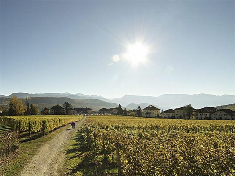 Percorso didattico sul vino di Castel Sallegg