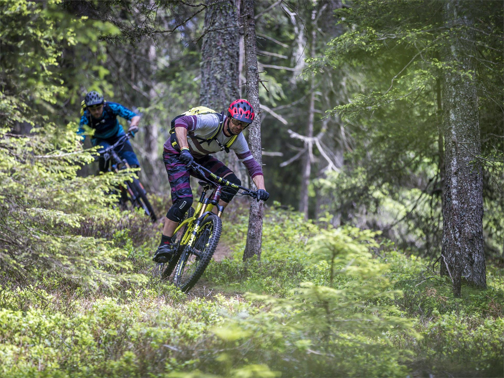 MTB Tour: Circular track Monte San Candido/ Innichberg