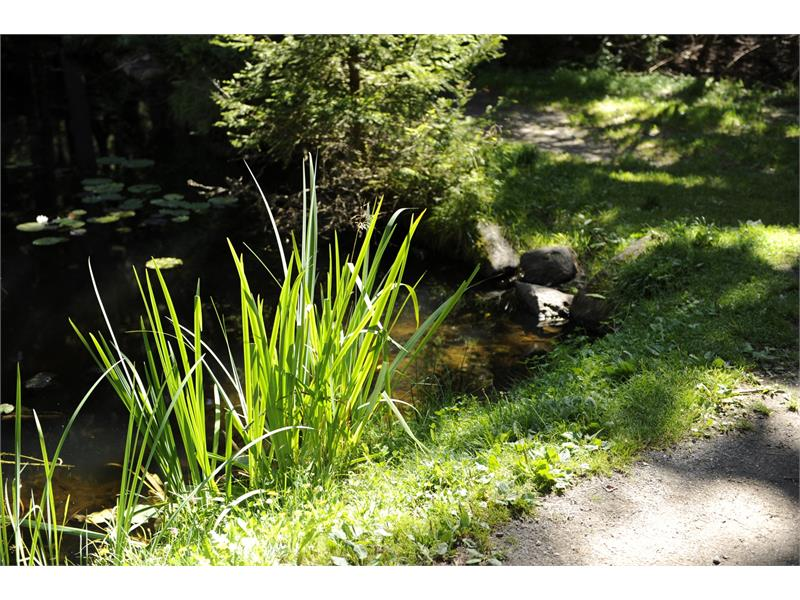 Sulfner Pond
