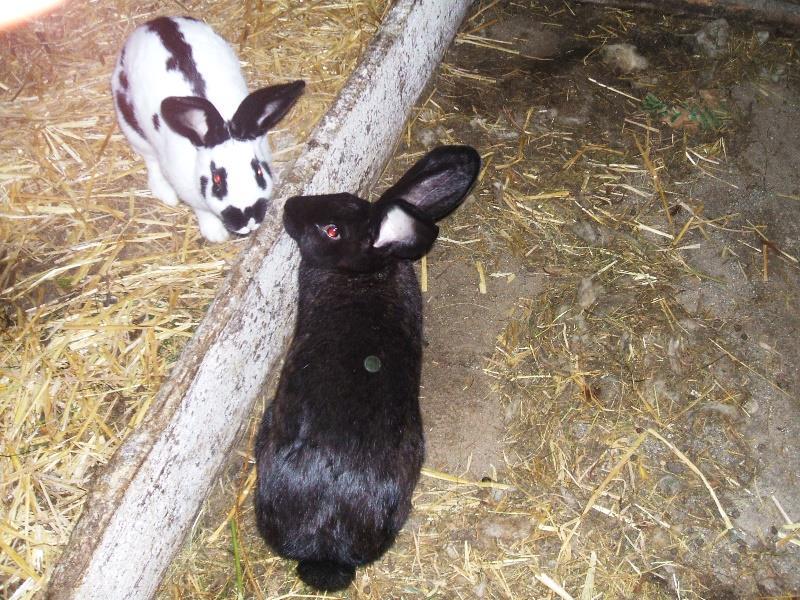 i nostri conigli