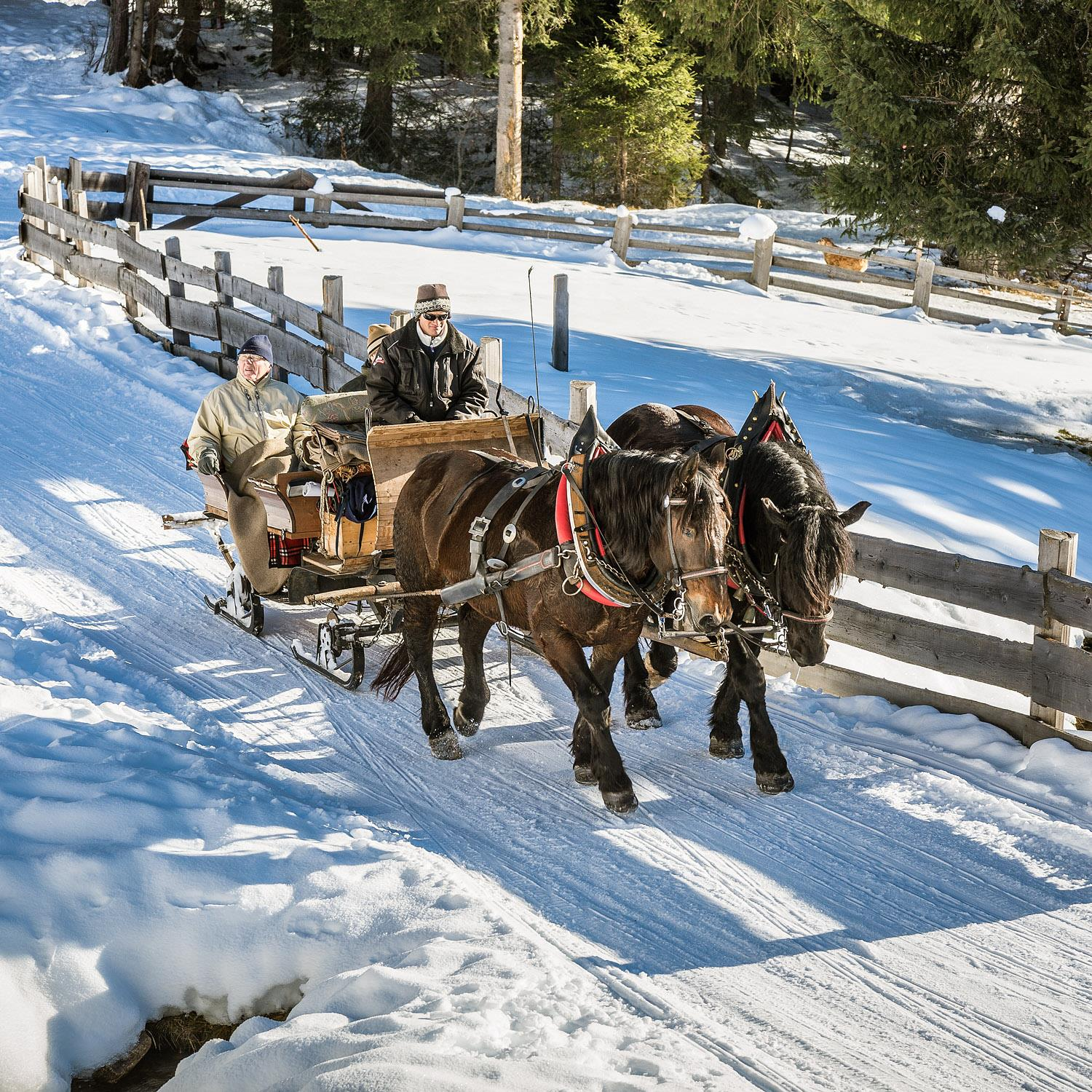 Horse-drawn sleigh ride in Val Casies Valley