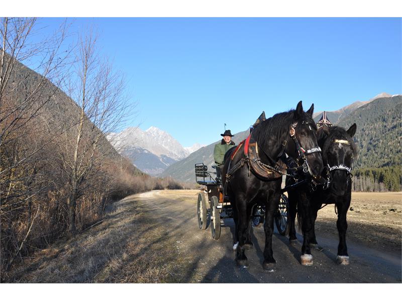 Gite in carozza o slitta trainate da cavalli Rasun Anterselva
