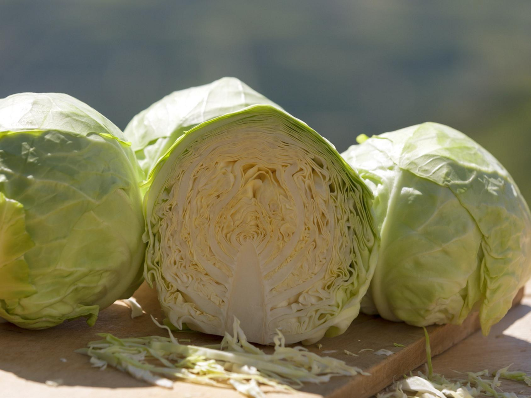 Lasa cabbage weeks